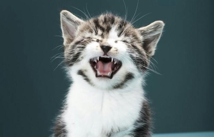 Почему кошка часто чихает: 8 причин, что делать, как лечить