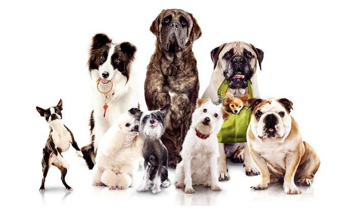 Породы собак для квартиры средних размеров короткошерстные