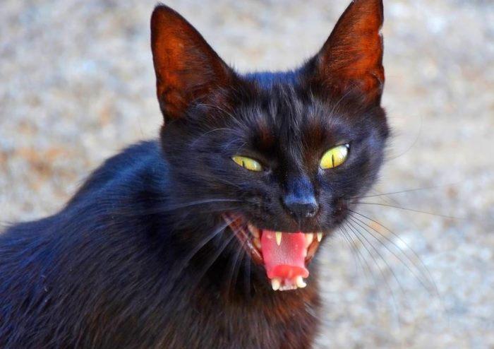 Анализы на бешенство у кошек