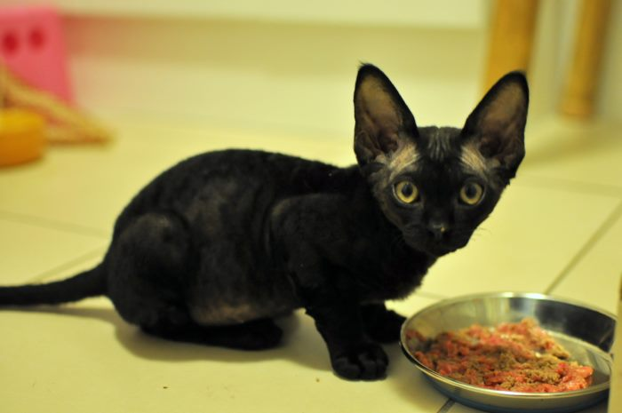 Как правильно кормить котенка 4 месяца