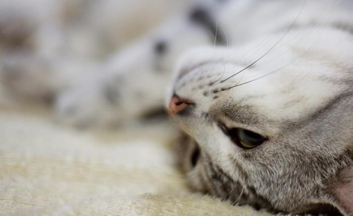 Диарея, Понос, Жидкий стул у кота - симптомы, лечение, препараты, причины появления