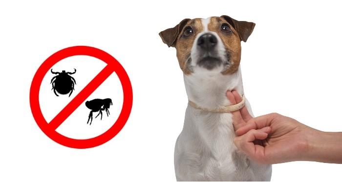 Ошейники для собак от блох и клещей: виды, характеристики, как выбрать, преимущества и недостатки