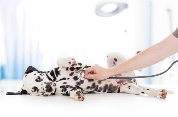 Пенистый жидкий стул у щенка