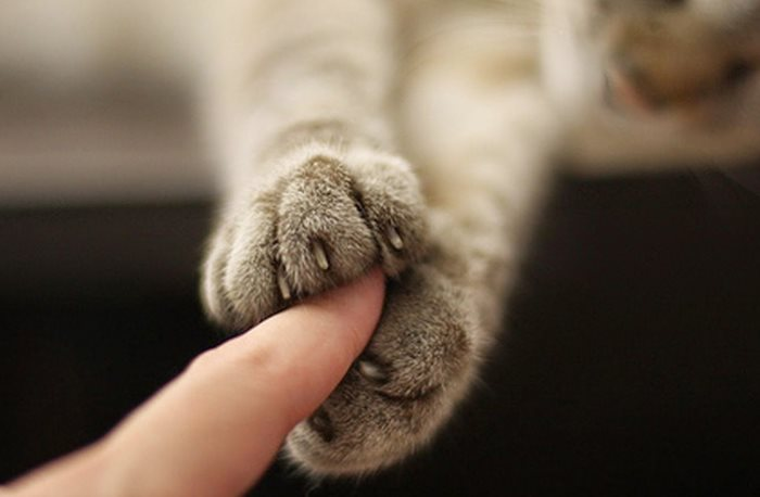 Опухоли у кошек: симптомы и лечение