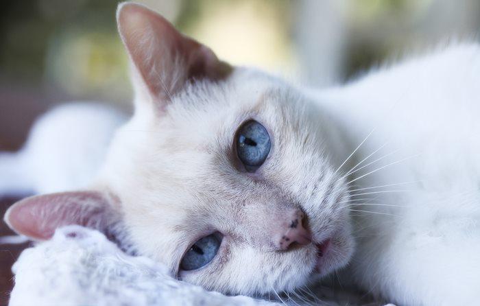 Нороклав побочные действия для кошек
