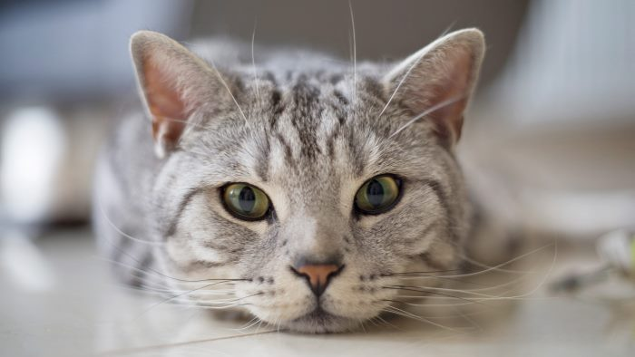 Что обозначают позы кошек. Кошка спит на спине: наблюдаем за животным и изучаем