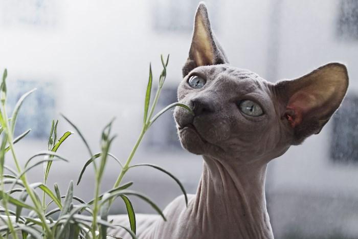 Запахи которые кошки не любят