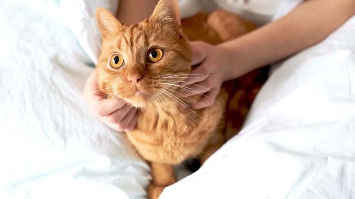 Вс о воспалении мочевого пузыря у кота симптомы и лечение