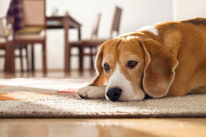 Признаки болезни мочевого пузыря у собак