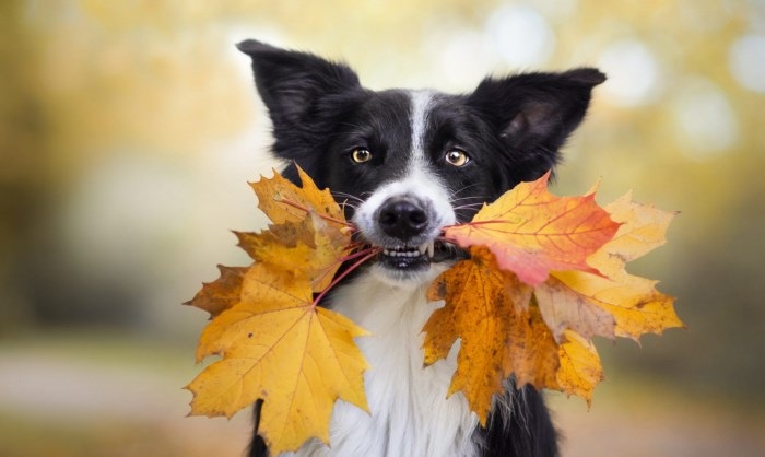 Хеликобактер у собак: причины заболевания, первые признаки, схема лечения, диета и рацион кормления