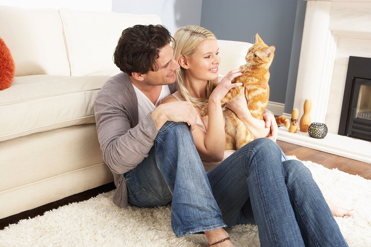 Кошки счастье в доме картинки
