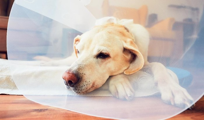 Стерилизация и кастрация кошек - в чем разница и какие последствия