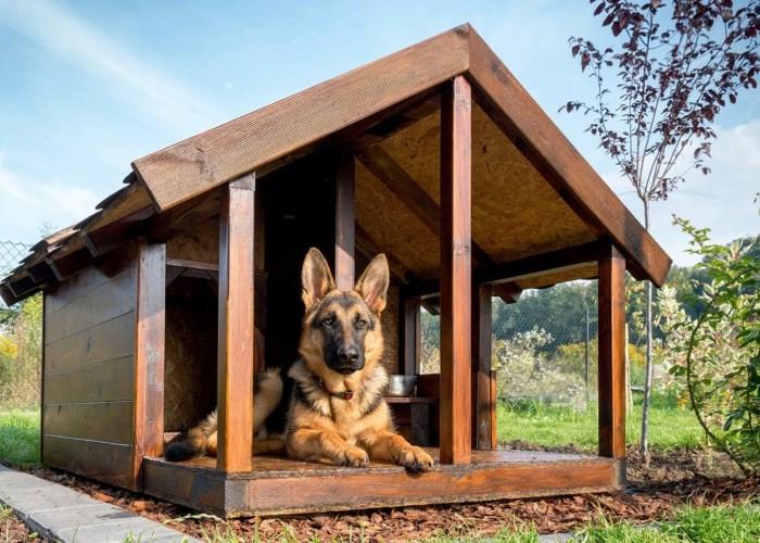 Почему собака не хочет спать в будке: основные причины ...