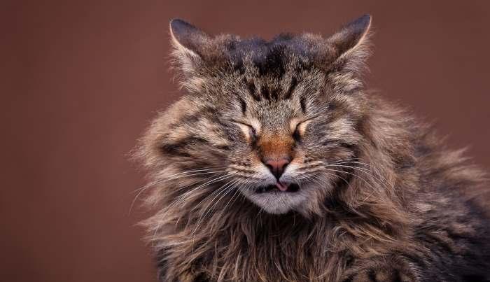 Как вылечить полипы у кота в носу
