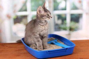Анализ кала методика кошки thumbnail