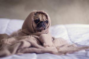Собак чем кормить при кишечной инфекции у собак чем кормить