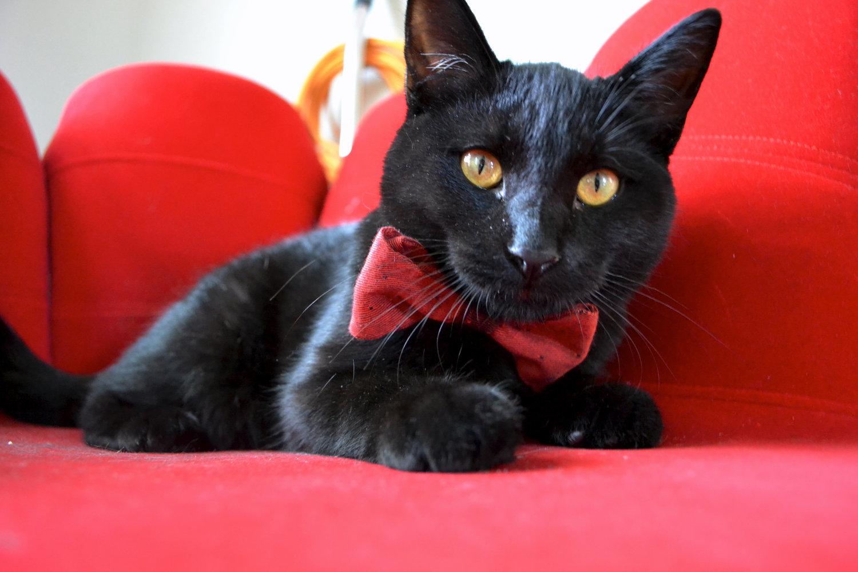 Ошейник для кота своими руками фото 558