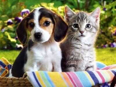 Как приучить собаку к котенку?