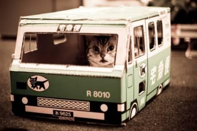 Как перевозить кошку в машине Основные правила для безопасной поездки