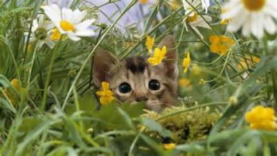 Советы владельцам как найти пропавшего кота в день пропажи и через время