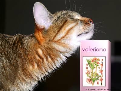 Почему кошкам нравится валерьянка