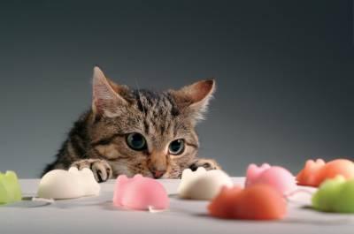 Низкобелковая диета для кота диета