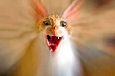 Как вывести кошку или кота из стресса