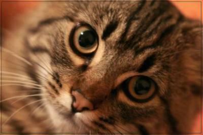 Глисты у кошек виды симптомы и профилактика