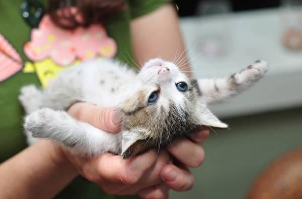 Пупочная грыжа у котенка и кошки симптомы и лечение в домашних условиях