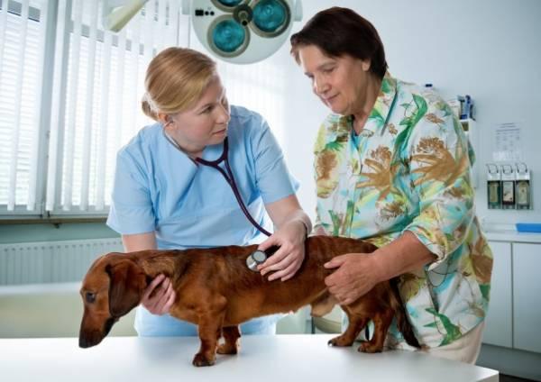 Грыжа у собак. Лечение – клиника Свой Доктор