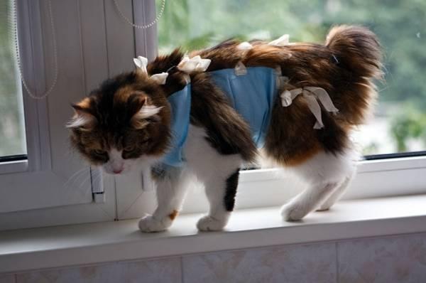 Корсет для кошки на позвоночнике своими руками
