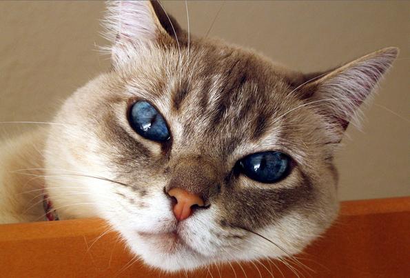 Отек квинке у кота неотложная помощь thumbnail