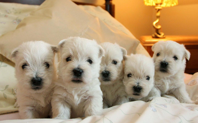 картинки с щенками вестика новый