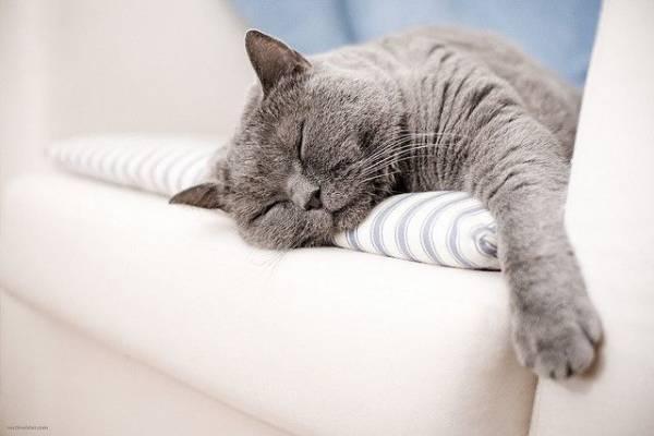 Почему кот храпит во сне и что с этим делать