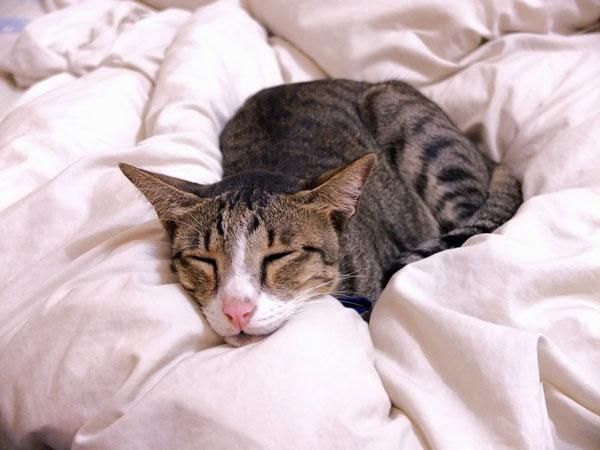 Отек шеи у кошек