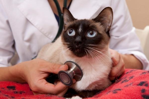 Воспаление кишечника у кошек – симптомы, причины и лечение