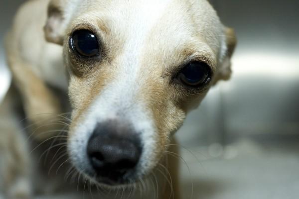 Отек мозга у собаки причины