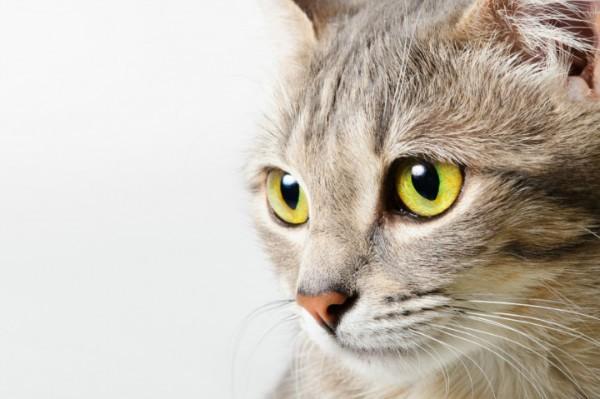 Бельмо на глазу у котенка