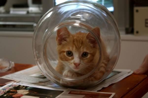 Отек мозга лечение у кошек thumbnail
