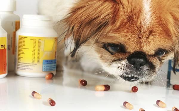 Иммуностимуляторы для собак: список, в таблетках