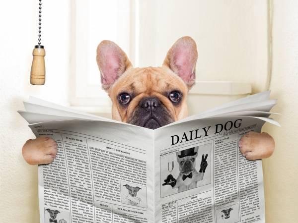 Понос у щенка: причины и лечение диареи