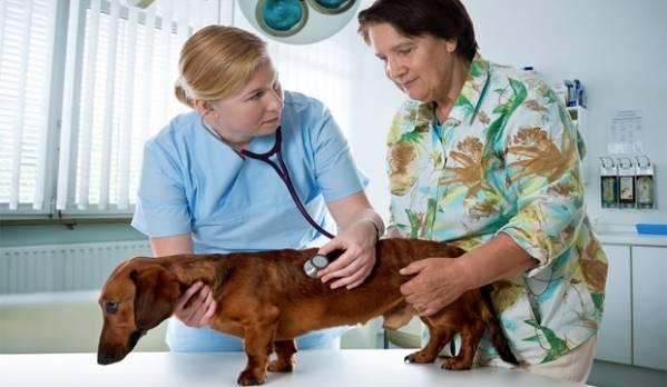 Защемление спинного мозга в позвоночнике у собаки