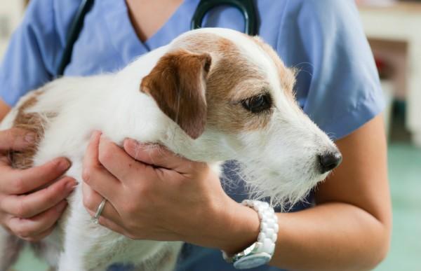 Остеофиты на позвоночнике у собак