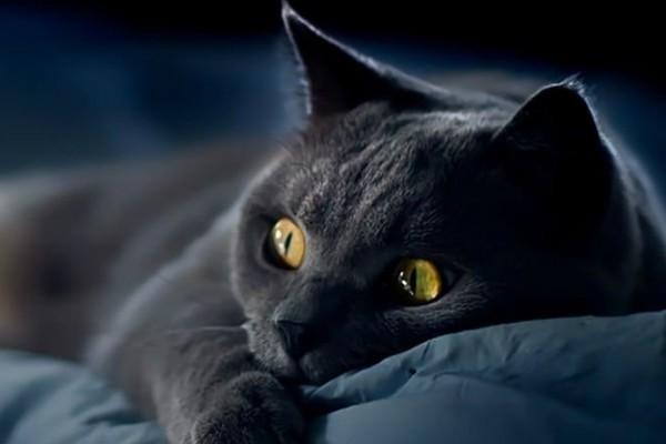 Пульс нормальный высокий низкий у кошек