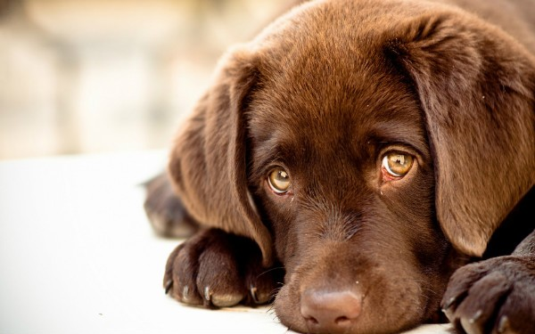 Почему текут глаза у собаки