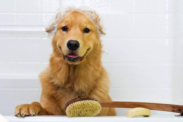Как распознать блошиный дерматит у собак и кошек чем лечить
