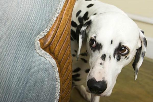 Разбираемся почему щенок боится улицы и помогаем ему преодолеть страх