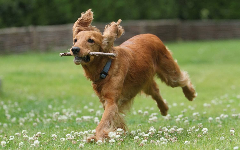 виде картинки собака бежит фото