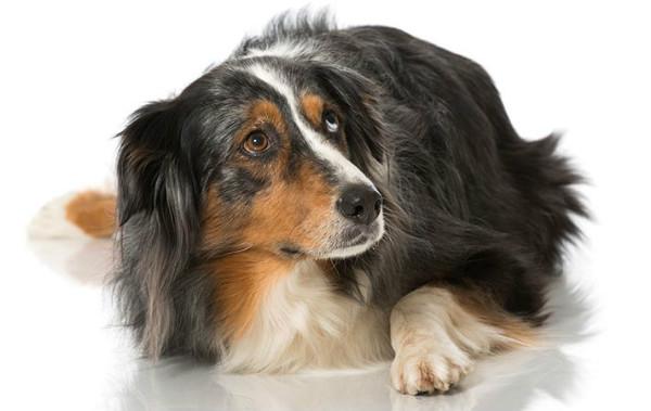 Почему собака боится