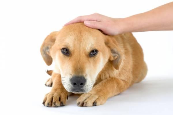 Как отучить щенка гадить дома и приучить к улице -